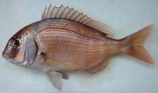 Descaling fish easily